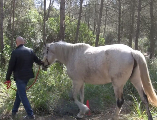 TEAMBUILDING: HORSE WHISPERING